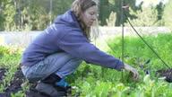 Organic CSA Farmer