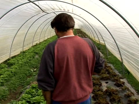 Organic is all the rage across France even in its prisons where one community of inmates is now raising its own pesticidefree produce and putting it...