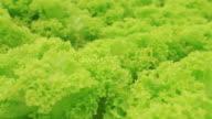 organics farm.