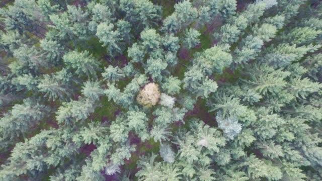 Original - standing alone between green trees