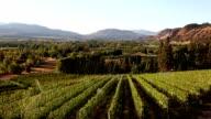 Osoyoos Vineyard Winery Okanagan Valley