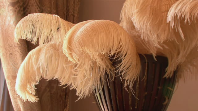 CU ZO Ostrich feathers in vase / Oudtshoorn, Western Cape, South Africa