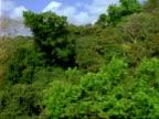 AERIAL over rainforest canopy, Panama.