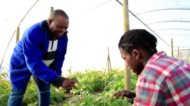 Over shoulder African men checking crop of beans