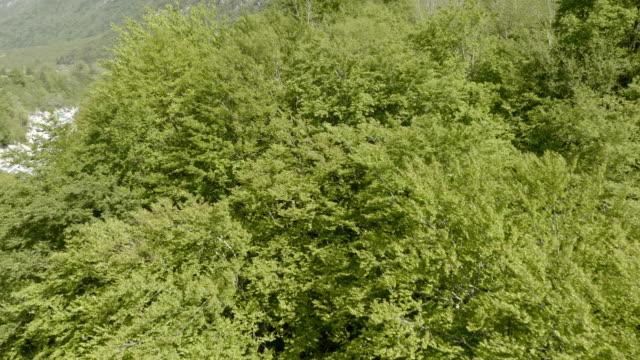 Antenne über die grünen Baumwipfel