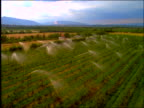AERIAL over vineyards with sprinklers / Provence, France