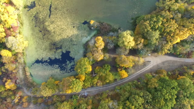 AERIAL: Overgrown pond in wildlife on sunny day