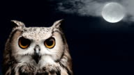 Owl at night with moon and clouds