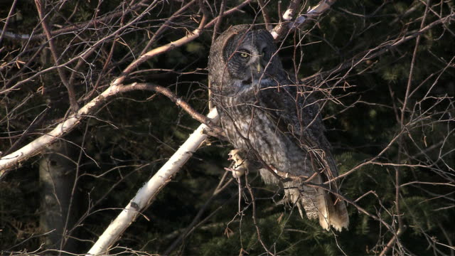 Owl perched in tree