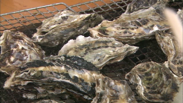 Oysters sizzle on a grill.