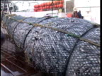 Pacific Ocean, NZ, MCU bulging fishing net being hauled onboard fishing boat.