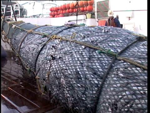 Pacific Ocean, NZ, MCU bulging fishing net being hauled onboard fishing boat.