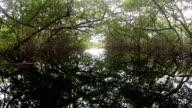 POV of paddling under lush green mangrove forest along ocean coast.
