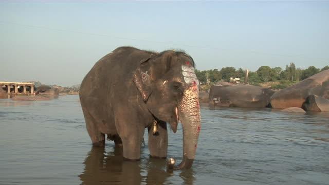 WS Painted elephant standing in the Tungabhadra river/ Hampi, Karnataka, India