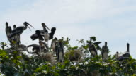 Geschilderde Storks op boom.