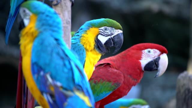 Par av aror sittande på en gren
