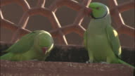 Pair of parakeets preen on Tomb of Akbar the Great one sidles up to the other then takes off Available in HD.
