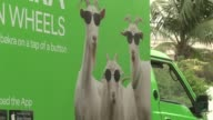 Pakistan's cattle markets have been crammed for weeks as the Muslim country prepares for the sacrificial festival of Eid al Adha this weekend but in...