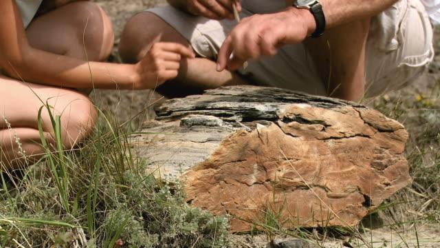 HD: Paleontology