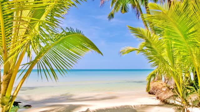 Palm bush gate to sea