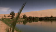 A palm frond and trees grow around the edge of an oasis near Ubari Libya. Available in HD.