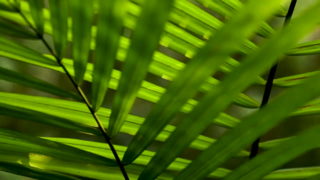 Palm fronds in the understory, tight abstract pan