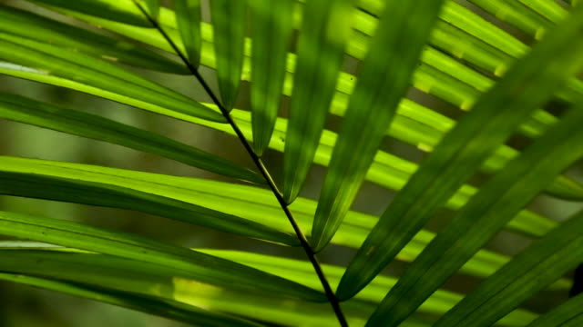Palm fronds in the understory, tight static abstract shot