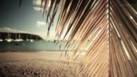 WS Palm fronds with sea in background / English Harbor, Antigua and Barbuda