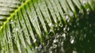 SLO MO LD Palm leaf in rain