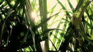 Palm leaves with sun shining through and lens flares
