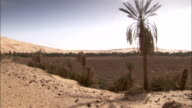 A palm tree and grasses grow around a dried up oasis near Ubari Libya. Available in HD.
