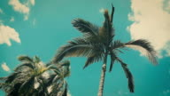 palm tree at the beach with blue sky and cloud in background - vintage style effect.
