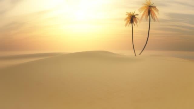 Palm tree in a desert.