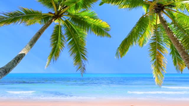 Palm tree in sunlight