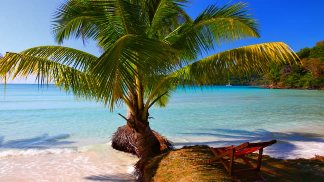 Palm tree in the sea water