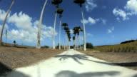 WS TU FISH EYE Palm tree lined road / Newtons, Christ Church, Barbados