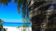 Albero di palme sulla spiaggia tropicale