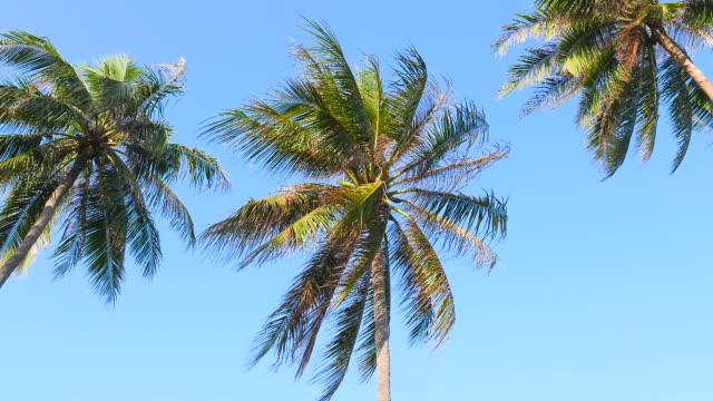 Palm tree on tropical beach