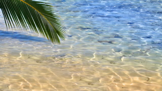 Palm tree twig touch clear sea water