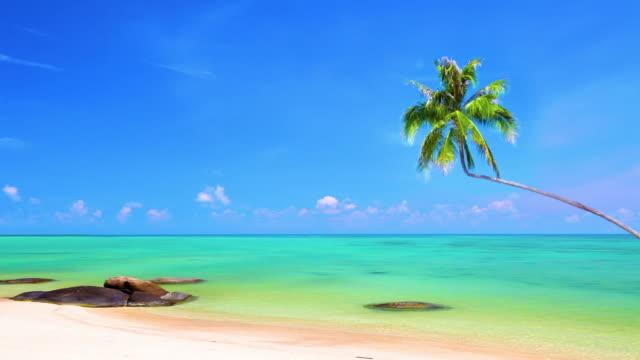 Palm tree under sea water