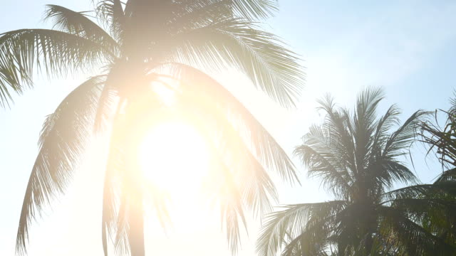 HD - Palm tree with sun flare