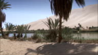 Palm trees and other plants grow in a desert oasis. Available in HD.