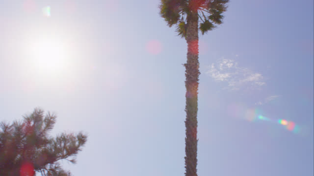 LA WS TS palm trees and sky, RED R3D 4K, 4K, 4KMSTR