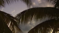MS TD Palm trees and sunset / Brightown, Barbados