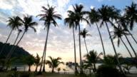 Palm trees at beach at sunset