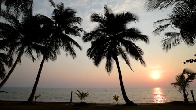 Palm trees at sea at sunset