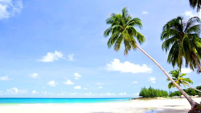 Palm trees bend on the white sand beach