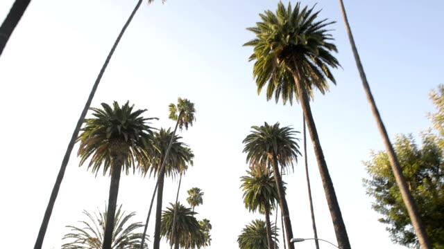 Palm Trees Cascade