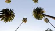 Palme cascata
