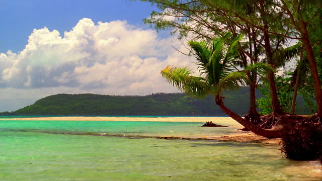 Palm trees hanging over beach and ocean / Bora Bora, French Polynesia, South Pacific